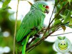 Biodiversidad de Honduras