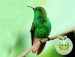Refugio de Vida Silvestre Colibri Esmeralda Hondureño