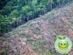 Deforestacion en Honduras