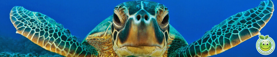 Dia Mundial de las Tortugas