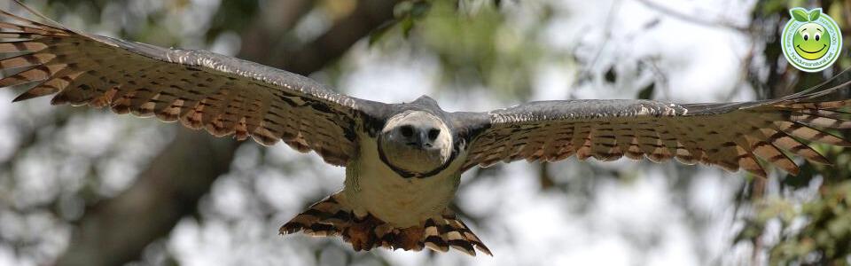 Extincion de vida Silvestre