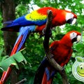 Fauna de Honduras