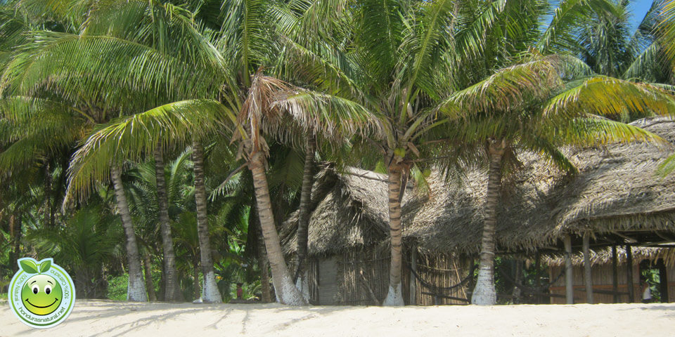 Honduras Blog Honduras Caribe tropical beach palms