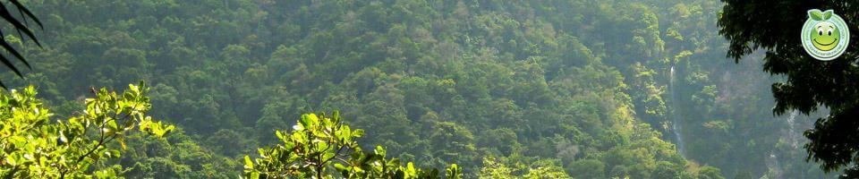 Tipos de Bosques de Honduras
