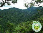 La Flora de Honduras