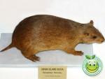 Especies Endemicas de Honduras