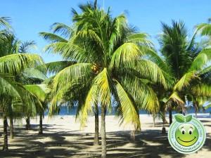 Hermosas Playas con palmeras de Tela Honduras